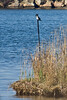 <center>Kingfisher  <br><br>Ninigret Wildlife Refuge - 10 October, 2011<br>Charlestown, Rhode Island</center>