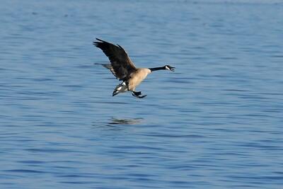 Goose landing - Guntersville, Alabama