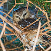 Birding Feb 2017 1215