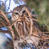 Birding Feb 2017 0364