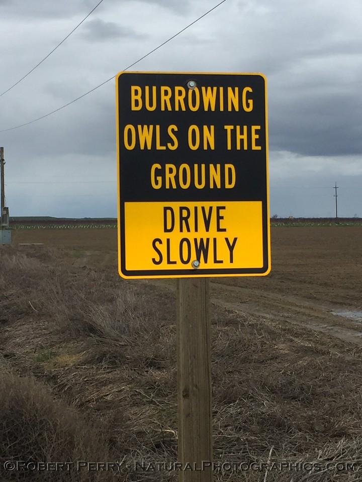 burrowing owl sign 2017 02-04 Davis-002