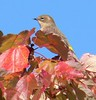 October 16 -- Long Road -- Yellow Rumped Warbler (one of many)<br /> Also lots of Monarchs