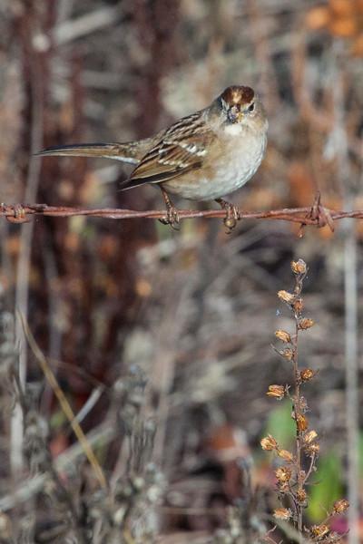 Sparrow1166