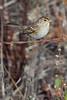 Sparrow1164