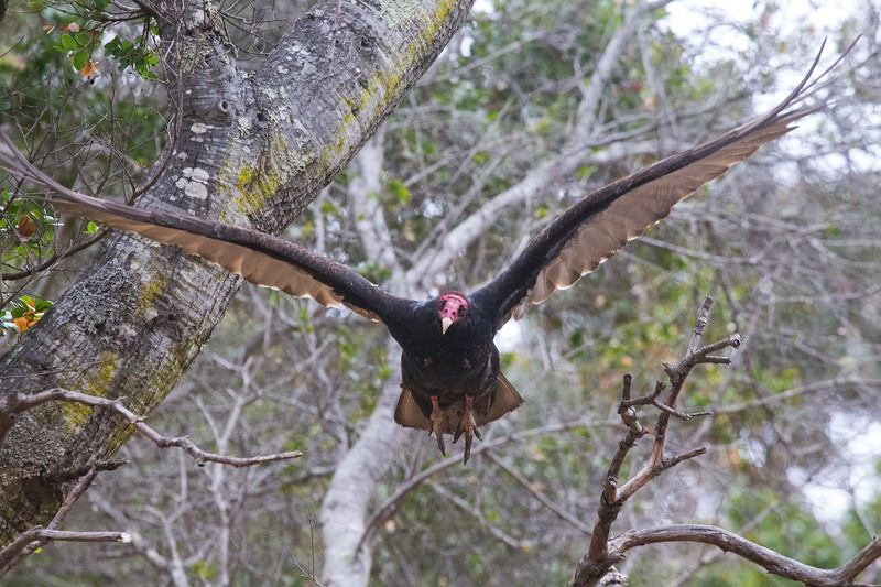 Vulture9228