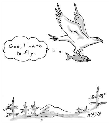 Osprey, in flight, with fish...............<br /> on paper, expressing my sentiments!<br /> <br /> New Yorker Cartoon of last week!