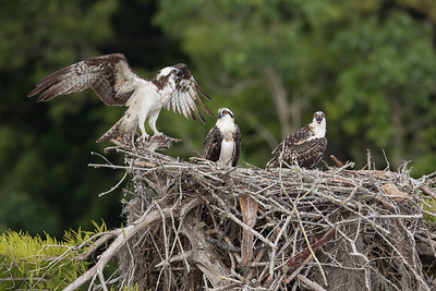 One big nest
