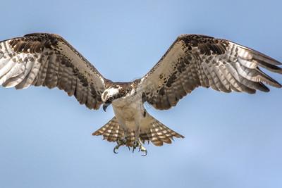 Osprey Acme 1350