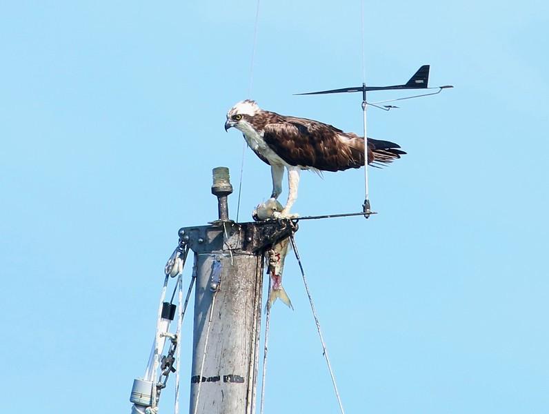 Atop a sailboat mast - East River Guilford, CT