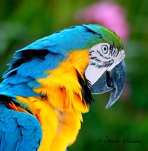Parrot on the Cayman Islands