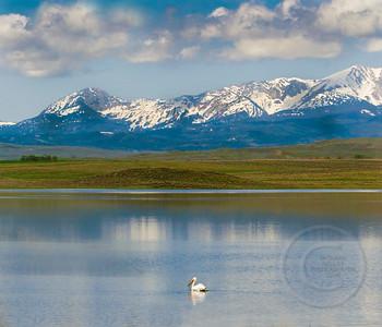 Pelican Enjoying the View 6754