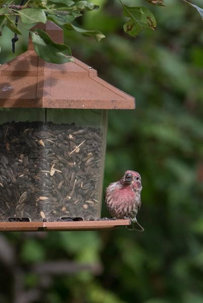 BirdFeederDay-220