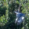 Kingfisher - my ISO was too high!