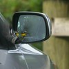 <b>Title - Yellow-throated Warbler on Car</b> <i>- Marcia Abrahams</i>