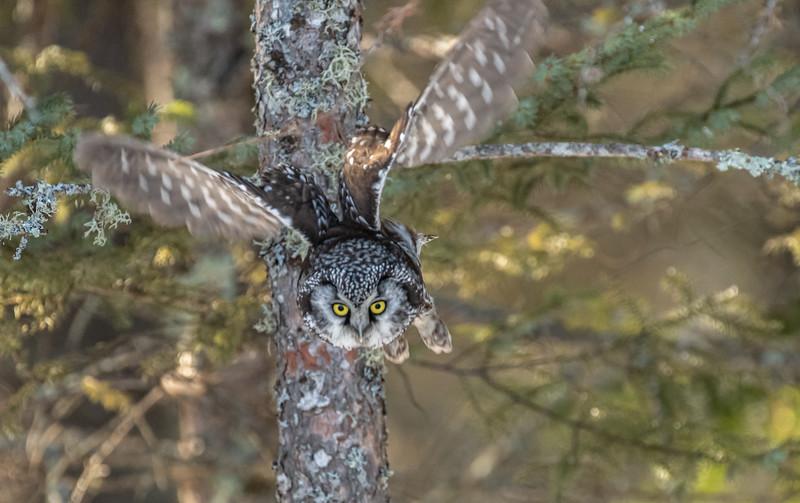 Eye on prey