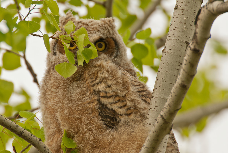 AGN-11010: Peek-a-boo Owlette