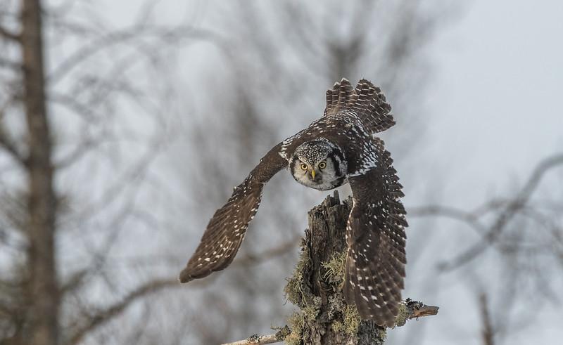 After prey