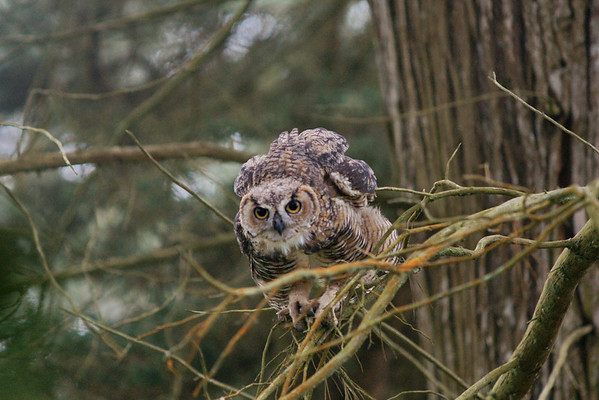 Owls at Stowe Lake 2011