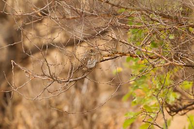 - Tarangire National Park, Tanzania
