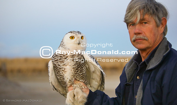 Norman Smith and Snowy Owl #1.