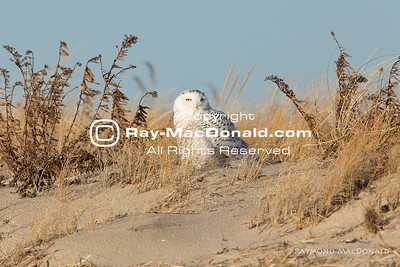 IMG_1446: ...back to the dune.