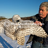 "IMG_2942  Norman Smith with Snowy Owl fitted with solar-assisted tracking transmitter.<br /> <br /> 2014_01-29 Duxbury Beach: Norman Smith of Audubon's Blue Hills Trailside Museum releases a Snowy Owl fitted with a tracking transmitter. See Mass Audubon's Snowy Owl Project Migration Maps to see movement data. <a href=""http://www.massaudubon.org/get-outdoors/wildlife-sanctuaries/blue-hills-trailside-museum/snowy-owl-project/migration-maps"">http://www.massaudubon.org/get-outdoors/wildlife-sanctuaries/blue-hills-trailside-museum/snowy-owl-project/migration-maps</a><br /> <br /> For real-time tracking of the Duxbury Snowy Owl see: Project SnowStorm; <a href=""http://www.projectsnowstorm.org/maps/duxbury/"">http://www.projectsnowstorm.org/maps/duxbury/</a> edit"