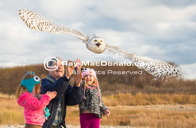 Norman Smith and Granddaughhters  release Snowy Owl