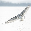 Snowy Owl Feather Patterns