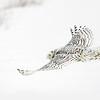 Snowy Owl Flying 2