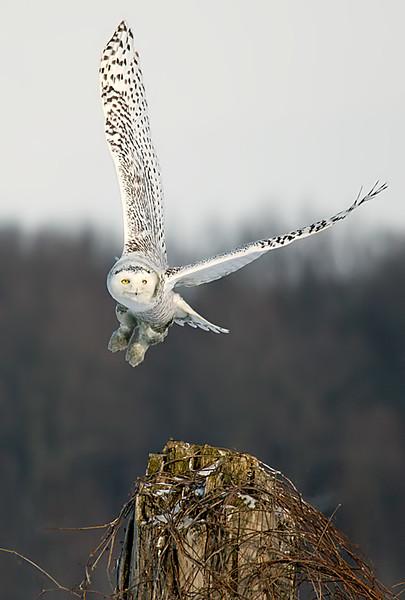 Takeoff 2