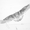 Snowy Owl Feather Patterns 2