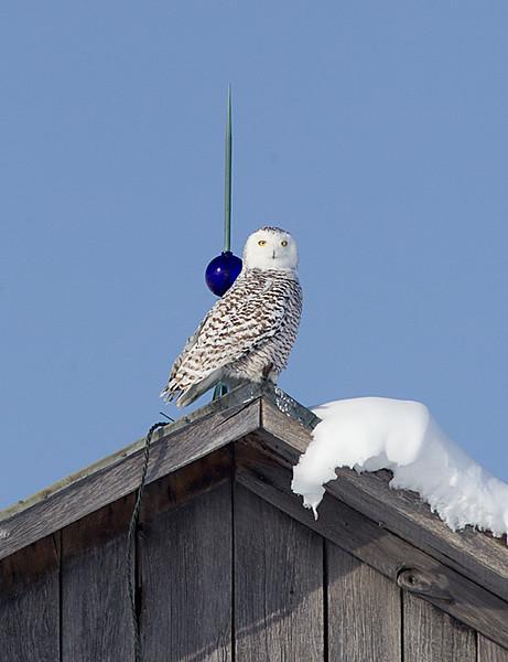 On Barn Roof with Lightening Rod