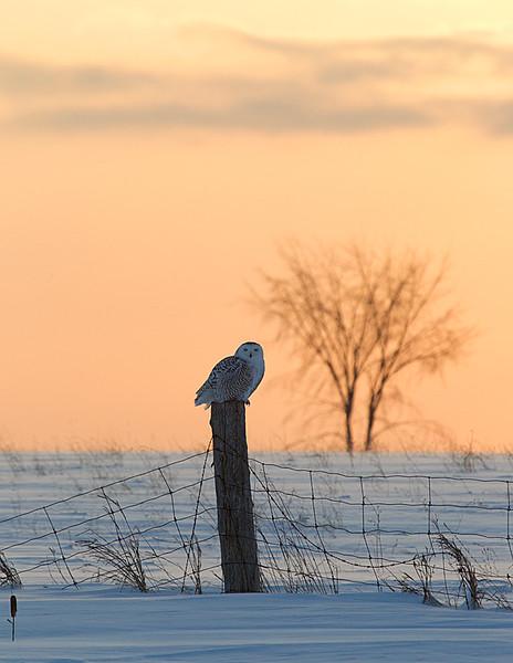 On Fence Post at Sunrise 2
