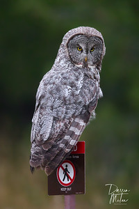 """""""Hoo Goes There!"""""""