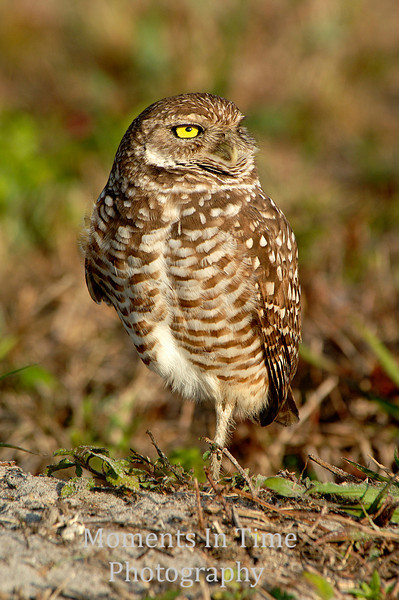 Owl on one leg