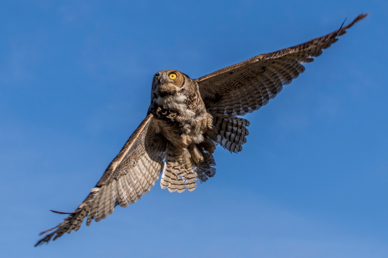 4-3-2017 Three Owls 599 SM