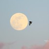 Short-eared Owl flying to the moon