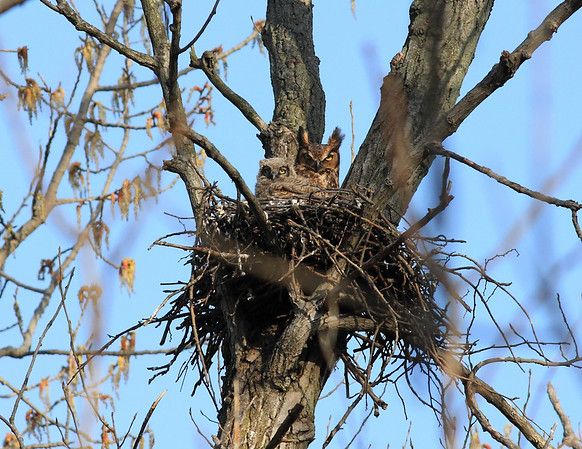 This is the other nest (location withheld for privacy).  I have some undesirables that still frequent my site.