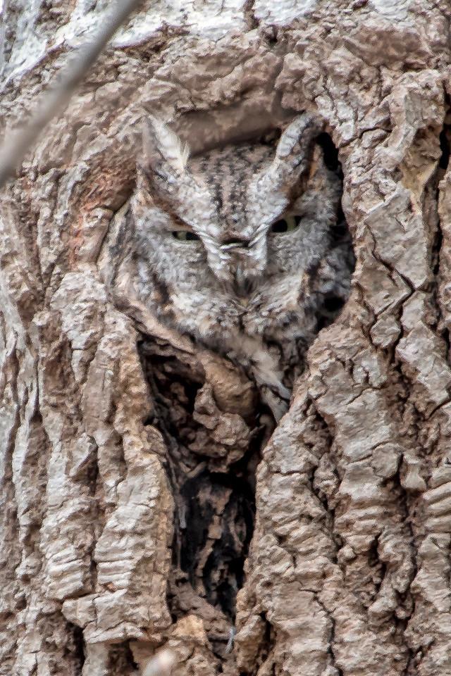 2-23-2016 Four Owls 328 SM