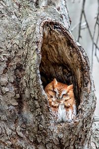 2-23-2016 Four Owls 305 SM
