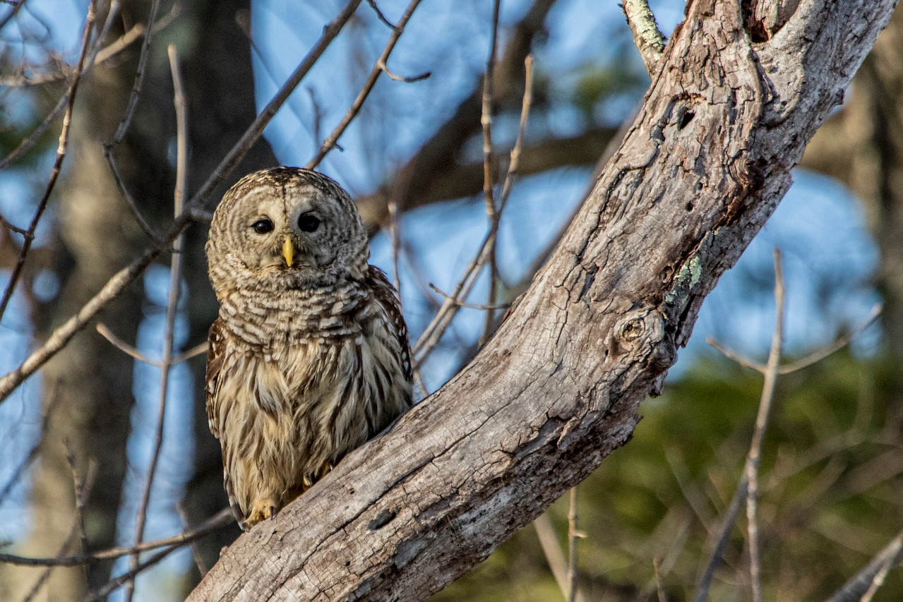 4-3-2017 Three Owls 705 SM