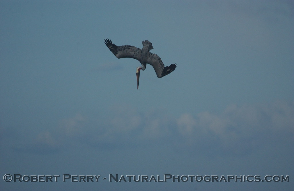 Brown Pelican begins its crash sequence from on high.