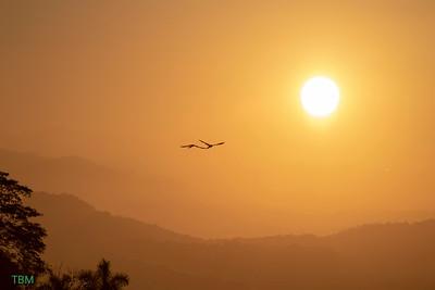 Macaw sunrise.