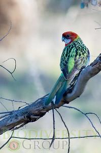 Biodiversity Group, PICT2308