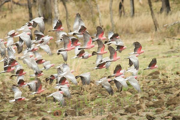 Biodiversity Group, PICT1390
