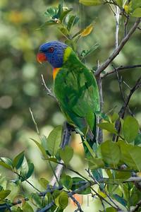 Biodiversity Group, PICT0768