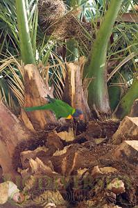 Biodiversity Group, PICT2487