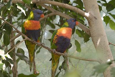 Biodiversity Group, PICT0931