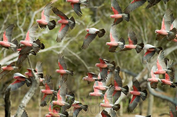 Biodiversity Group, PICT1371