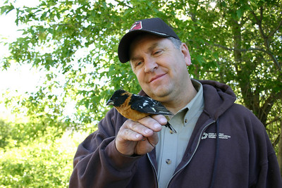 Scott Root holding black headed grosbeak.  Photo by Scott Root, Utah Division of Wildlife Resources.